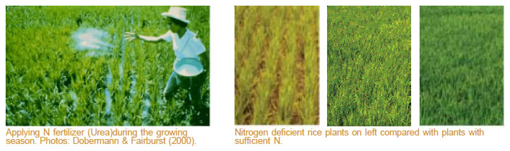 factsheet-n-fertilizer
