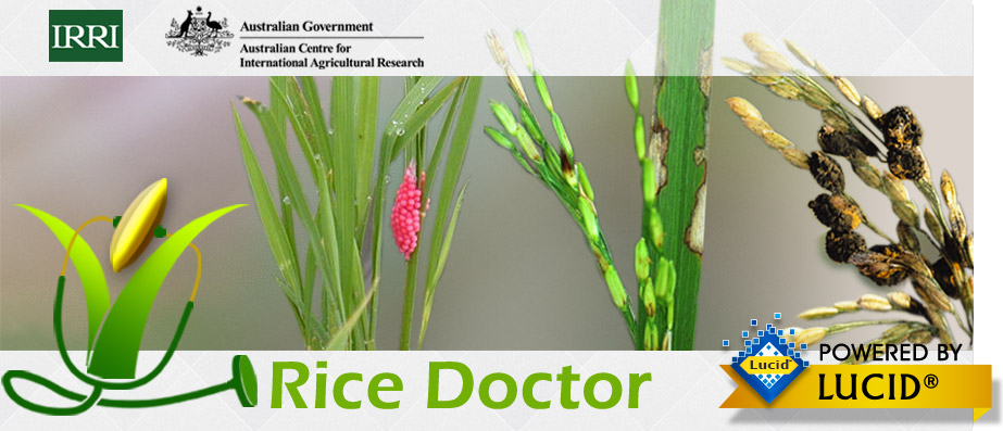 Rice Doctor banner