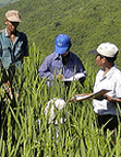 Farmer participatory research