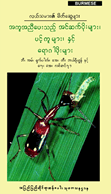 Friends of the Rice Farmer- Helpful Insects, Spiders, and Pathogens (Burmese)